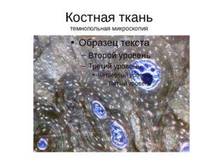 Костная ткань темнопольная микроскопия
