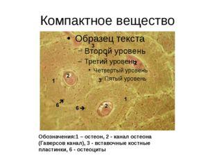 Компактное вещество Обозначения:1 – остеон, 2 - канал остеона (Гаверсов канал