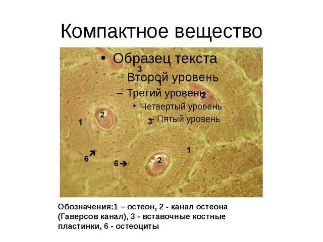 Компактное вещество Обозначения:1 – остеон, 2 - канал остеона (Гаверсов канал...
