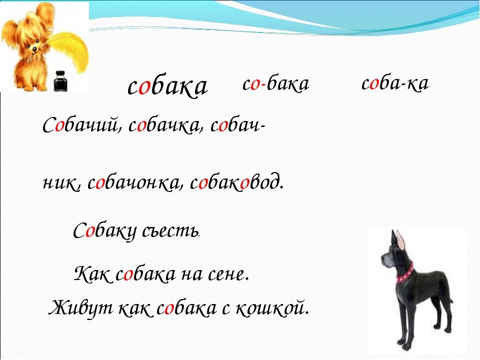 собака Собачий, собачка, собач- ник, собачонка, собаковод. Собаку съесть. Как...