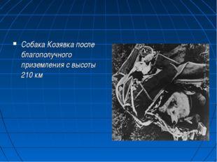 Собака Козявка после благополучного приземления с высоты 210 км