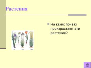 Растения На каких почвах произрастают эти растения?