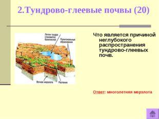 2.Тундрово-глеевые почвы (20) Что является причиной неглубокого распространен