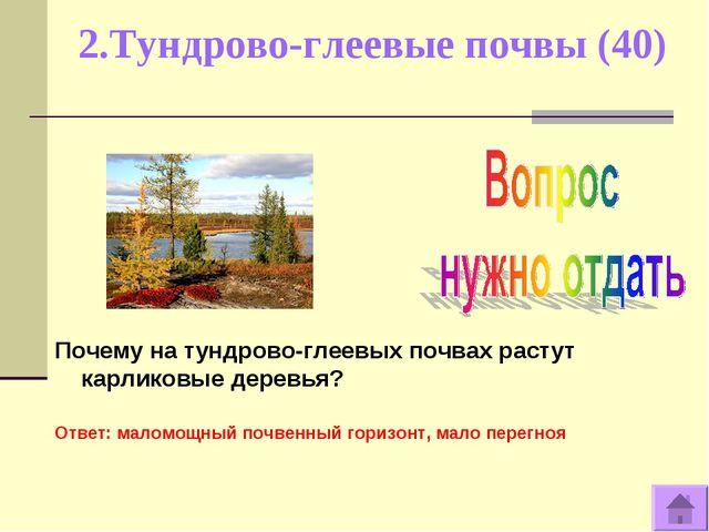 2.Тундрово-глеевые почвы (40) Почему на тундрово-глеевых почвах растут карлик...