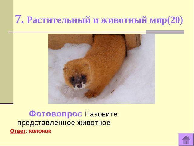 7. Растительный и животный мир(20) Фотовопрос Назовите представленное животно...