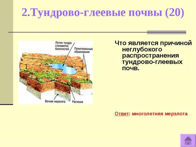 2.Тундрово-глеевые почвы (20) Что является причиной неглубокого распространен...