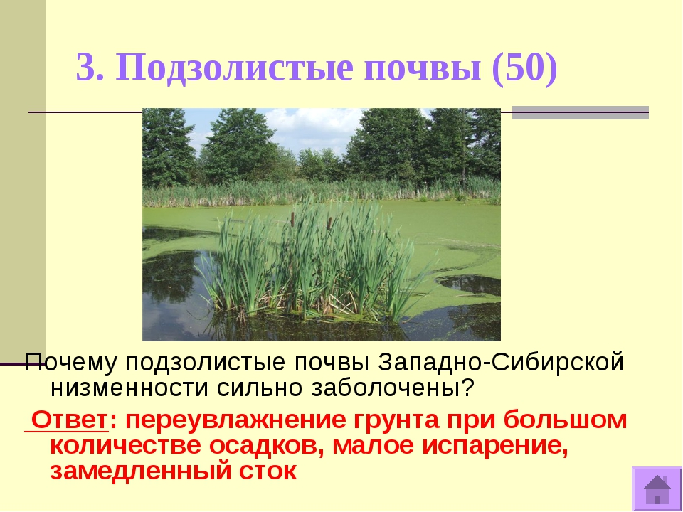 3. Подзолистые почвы (50) Почему подзолистые почвы Западно-Сибирской низменно...
