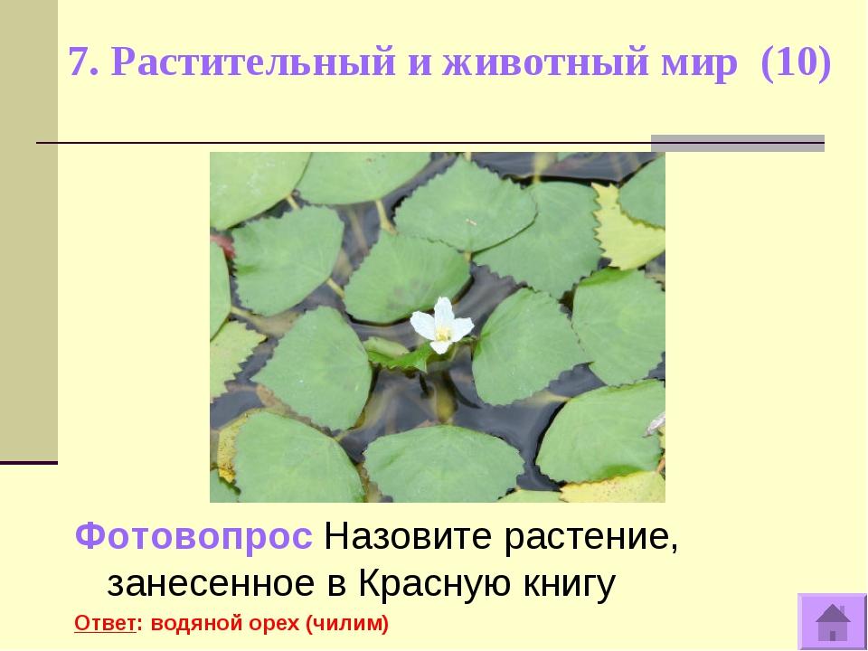 7. Растительный и животный мир (10) Фотовопрос Назовите растение, занесенное...