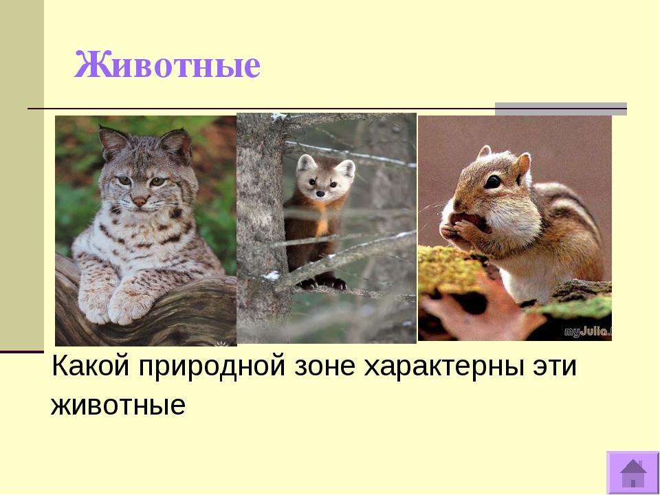 Животные Какой природной зоне характерны эти животные