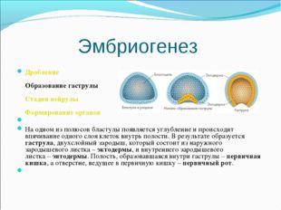 Эмбриогенез Дробление Образование гаструлы Стадия нейрулы Формирование органо