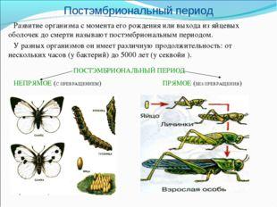 Постэмбриональный период Развитие организма с момента его рождения или выхода