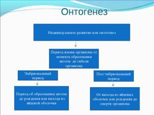 Онтогенез Индивидуальное развитие или онтогенез Период жизни организма от мо