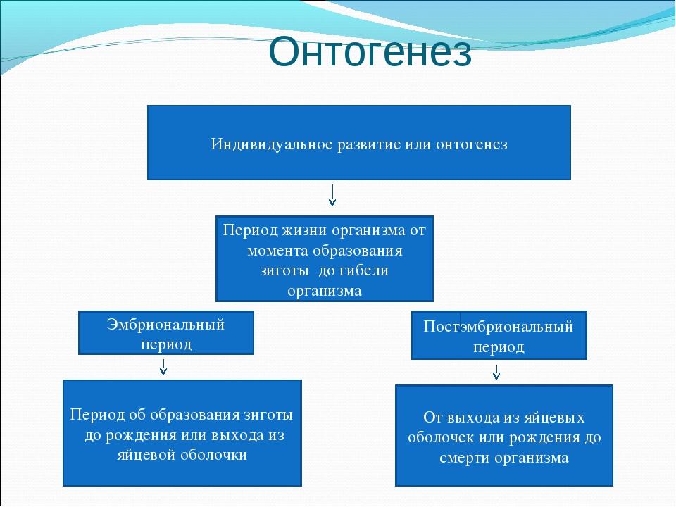 Онтогенез Индивидуальное развитие или онтогенез Период жизни организма от мо...
