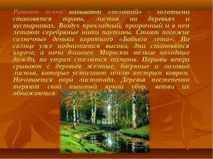 Раннюю осень называют «золотой» - золотыми становятся травы, листья на деревь