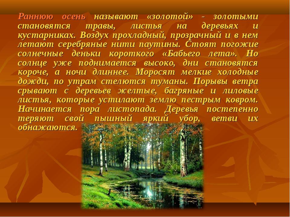 Раннюю осень называют «золотой» - золотыми становятся травы, листья на деревь...