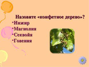 Назовите «конфетное дерево»? Инжир Магнолия Секвойя Говения