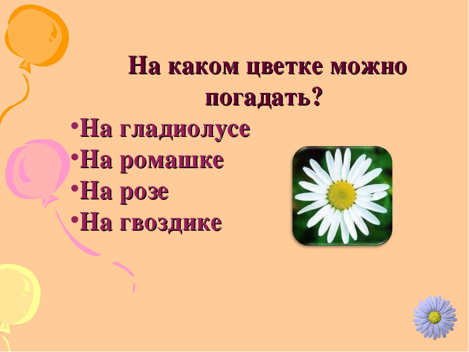 На каком цветке можно погадать? На гладиолусе На ромашке На розе На гвоздике