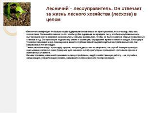 Лесничий – лесоуправитель. Он отвечает за жизнь лесного хозяйства (лесхоза) в