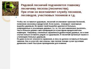 Рядовой лесничий подчиняется главному лесничему лесхоза (лесничества). При эт