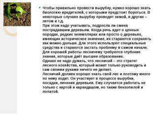 Чтобы правильно провести вырубку, нужно хорошо знать биологию вредителей, с