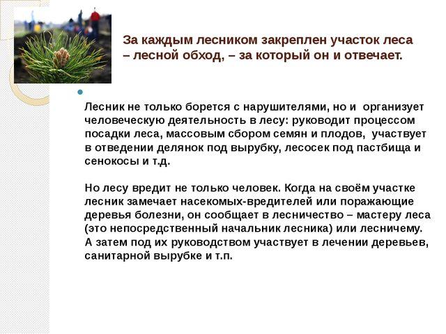 За каждым лесником закреплен участок леса – лесной обход, – за который он и о...