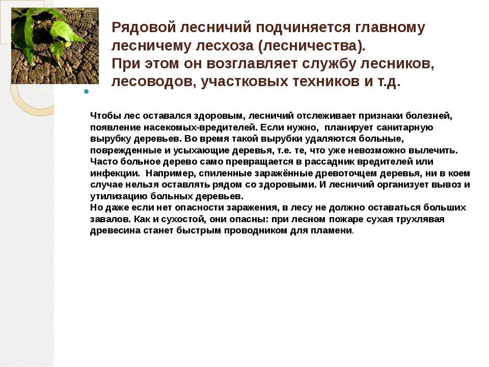 Рядовой лесничий подчиняется главному лесничему лесхоза (лесничества). При эт...
