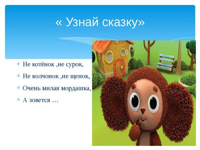 « Узнай сказку» Не котёнок ,не сурок, Не волчонок ,не щенок, Очень милая морд...