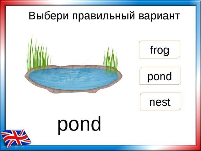 Выбери правильный вариант pond frog nest pond