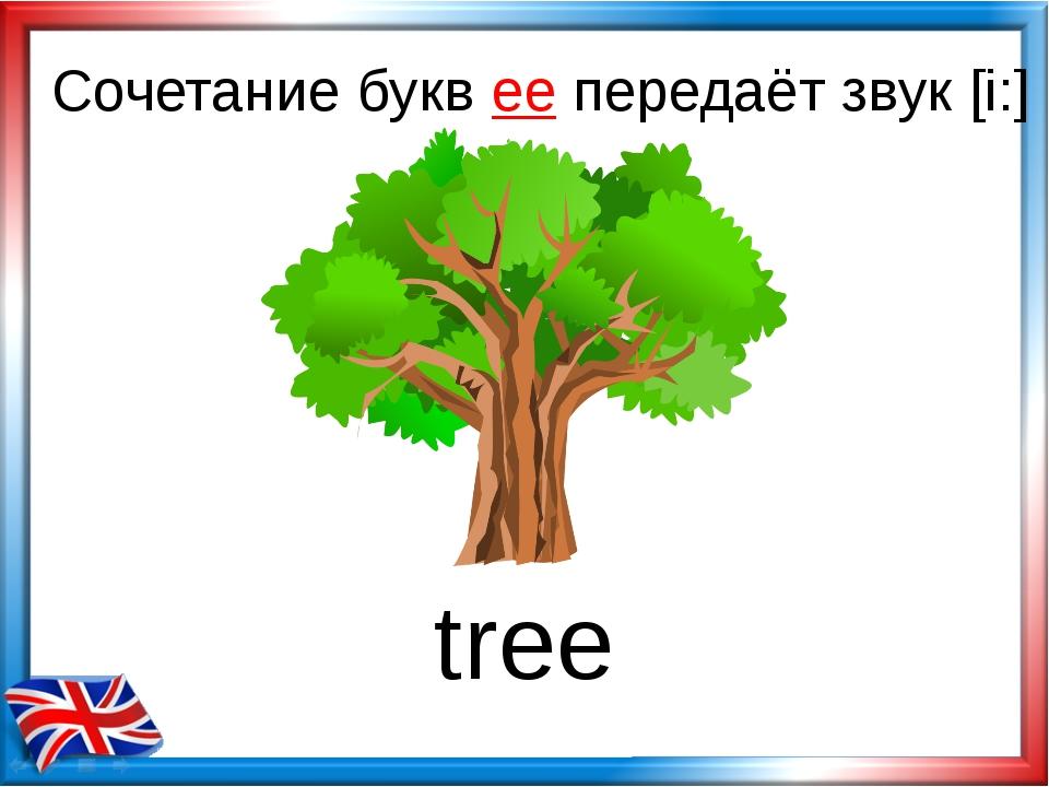 Сочетание букв ee передаёт звук [i:] tree