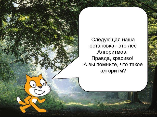 Следующая наша остановка– это лес Алгоритмов. Правда, красиво! А вы помните,...