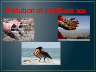 Pollution of the Black sea