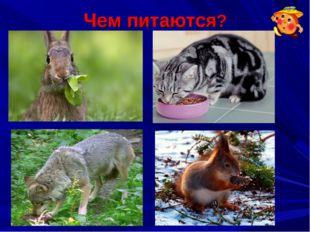 Чем питаются?