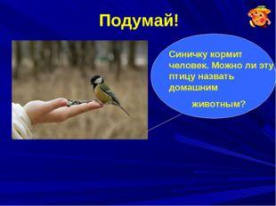 Подумай! Синичку кормит человек. Можно ли эту птицу назвать домашним животным?