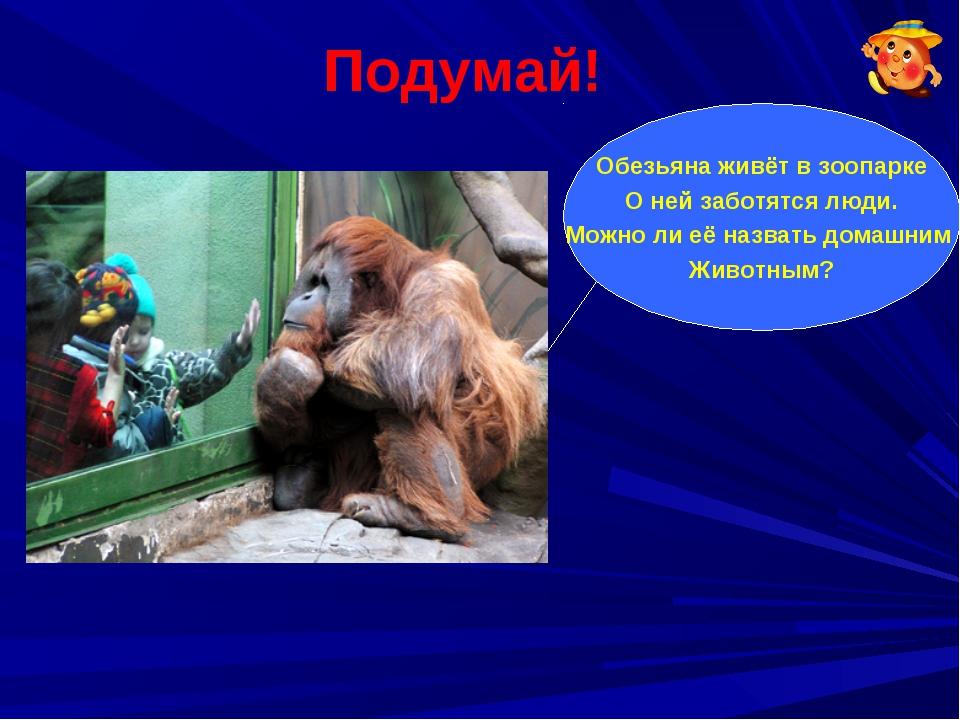Подумай! Обезьяна живёт в зоопарке О ней заботятся люди. Можно ли её назвать...