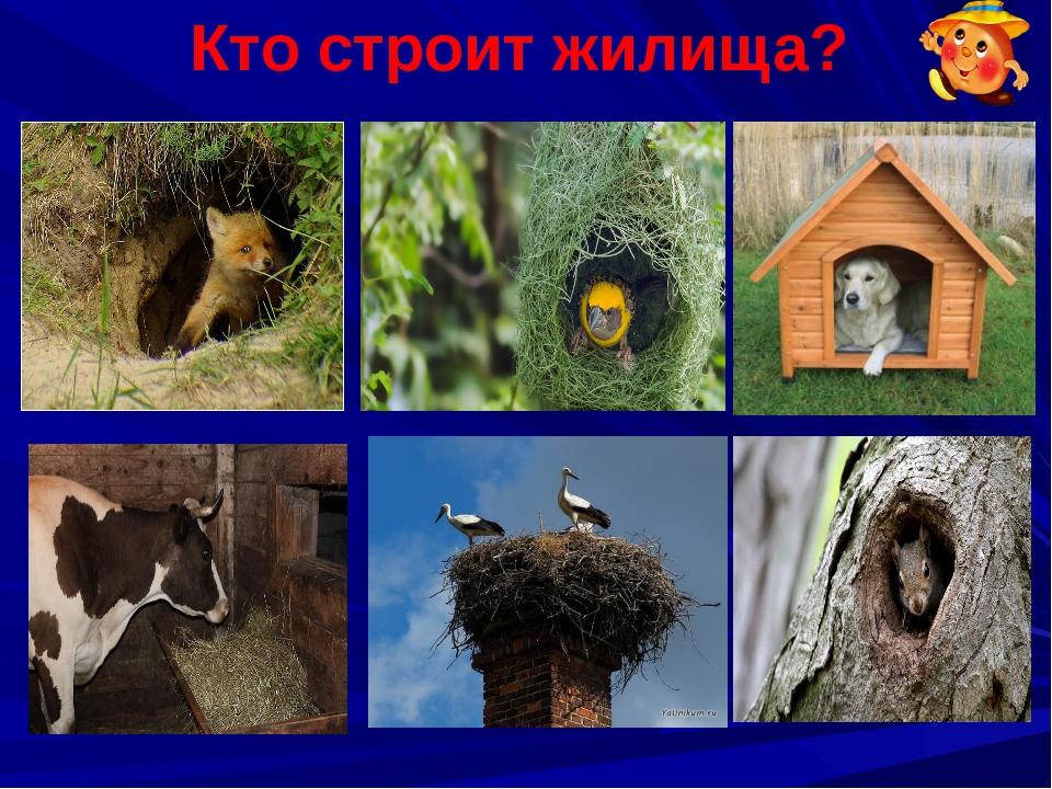 Жилища животных в картинках