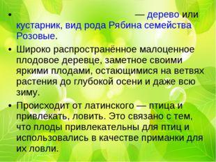 Ряби́на обыкнове́нная — дерево или кустарник, вид рода Рябина семейства Розов