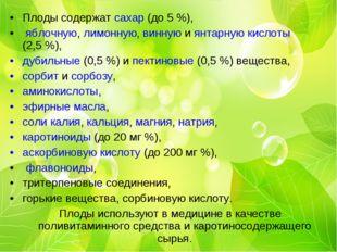 Плоды содержат сахар (до 5%), яблочную, лимонную, винную и янтарную кислоты