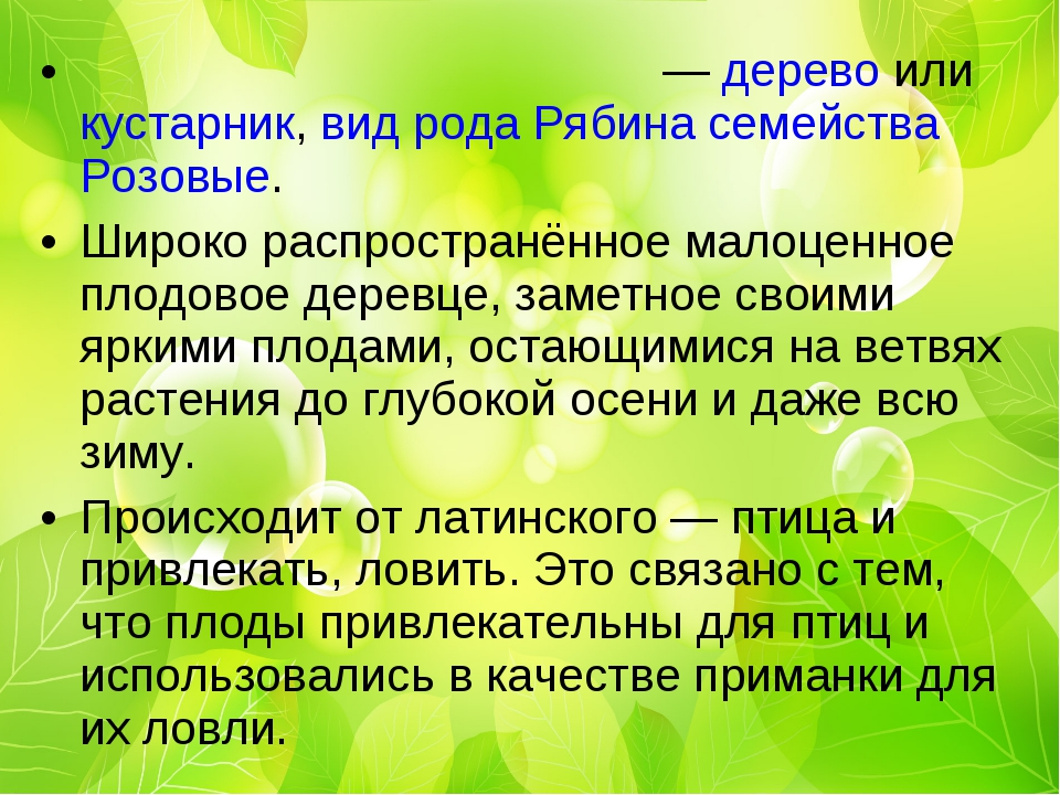 Ряби́на обыкнове́нная — дерево или кустарник, вид рода Рябина семейства Розов...