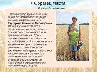 Лабораторию яровой пшеницы много лет возглавляет кандидат сельскохозяйственн