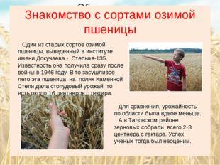 Знакомство с сортами озимой пшеницы Один из старых сортов озимой пшеницы, выв