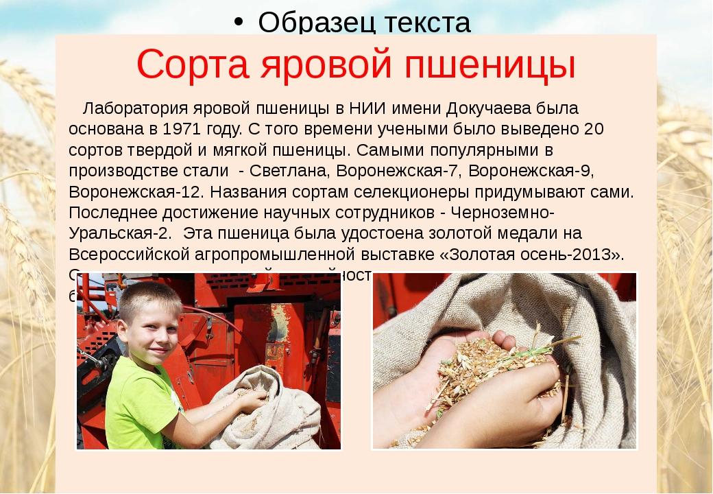 Сорта яровой пшеницы Лаборатория яровой пшеницы в НИИ имени Докучаева была ос...