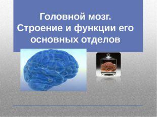 Головной мозг. Строение и функции его основных отделов