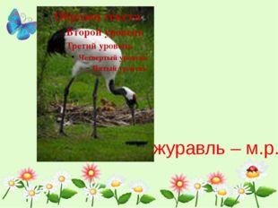 журавль – м.р.