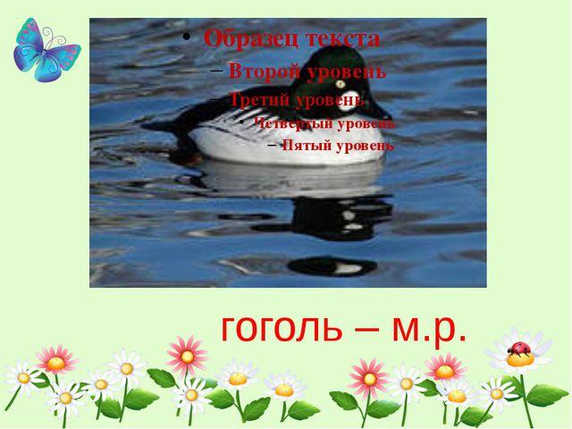 гоголь – м.р.