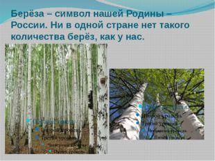 Берёза – символ нашей Родины – России. Ни в одной стране нет такого количеств