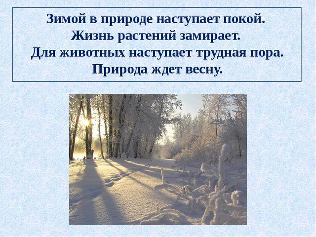 Зимой в природе наступает покой. Жизнь растений замирает. Для животных наступ...