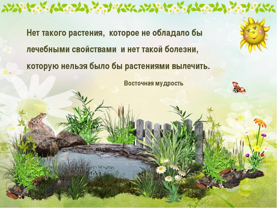 Нет такого растения, которое не обладало бы лечебными свойствами и нет такой...