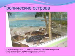Тропические острова Суповая черепаха, 2) Кожистая черепаха, 3) Оливковая ридл
