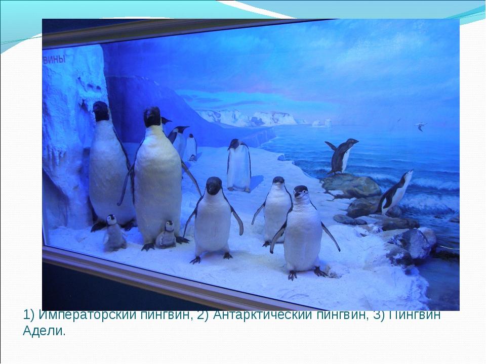 1) Императорский пингвин, 2) Антарктический пингвин, 3) Пингвин Адели.