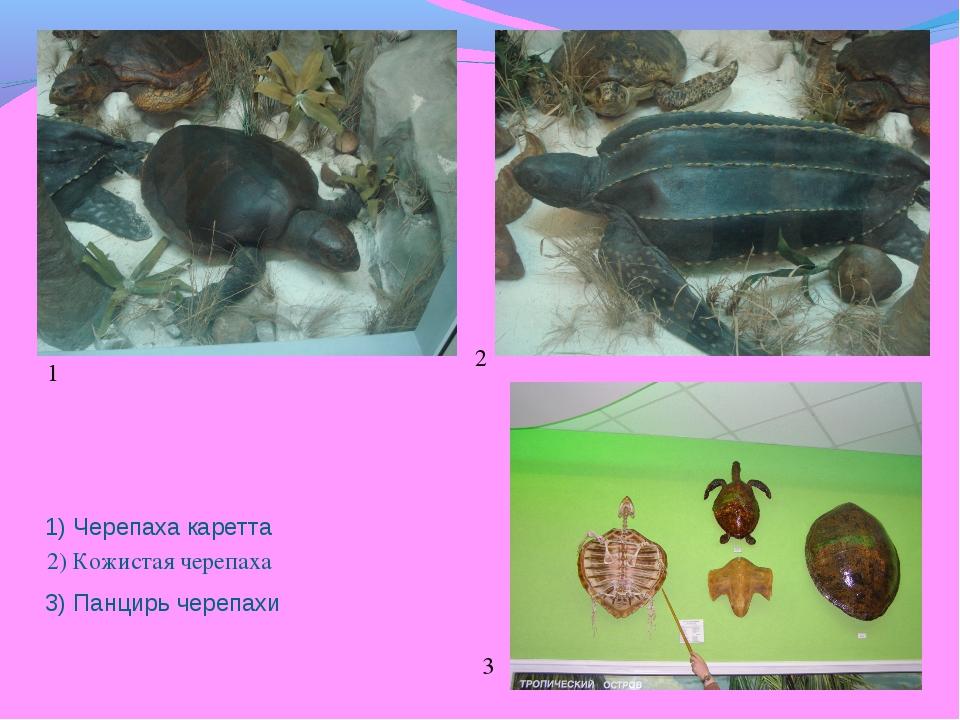 1) Черепаха каретта 3) Панцирь черепахи 2) Кожистая черепаха 1 1 2 3